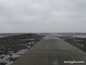 13 oyster harvesting