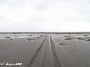 3 oyster harvesting