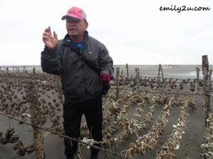 7 oyster harvesting