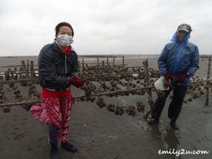 8 oyster harvesting