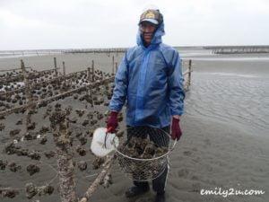 9 oyster harvesting