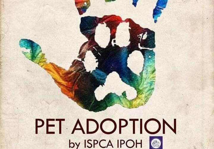 Adopt A Pet @ WOW Kampar 2019