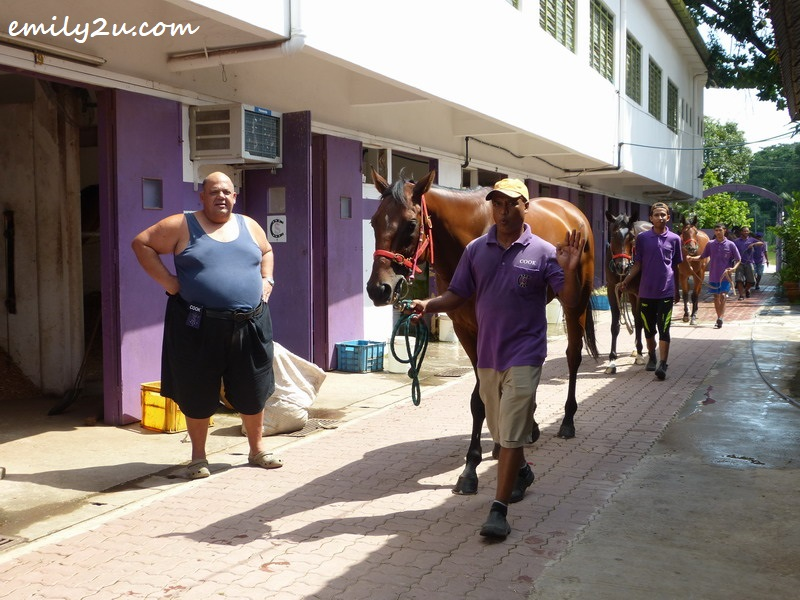 Cook watches as his horses are being exercised