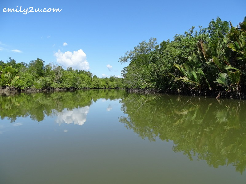 cruising to the mangrove area