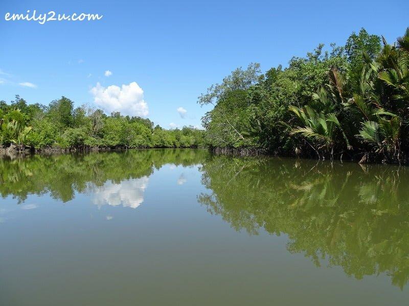 cruising to the mangrove area