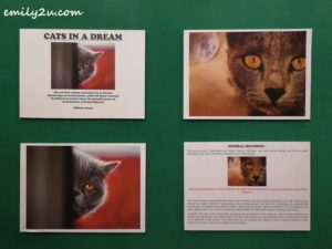 7 Cat Museum Kuching Sarawak
