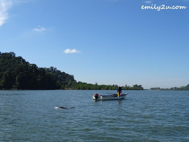 Irrawaddy dolphin spotting