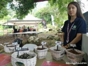 eco-friendly wild Borneo potpourri