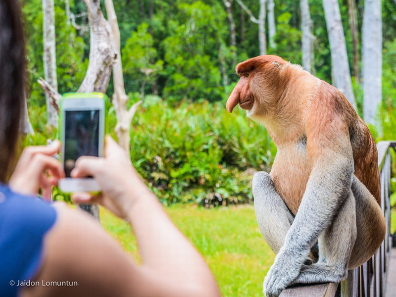 Labuk Bay Proboscis Monkey Sanctuary (Photo: Sabah Tourism Board)