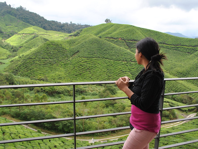 in Cameron Highlands