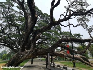 3 Raintree Walk