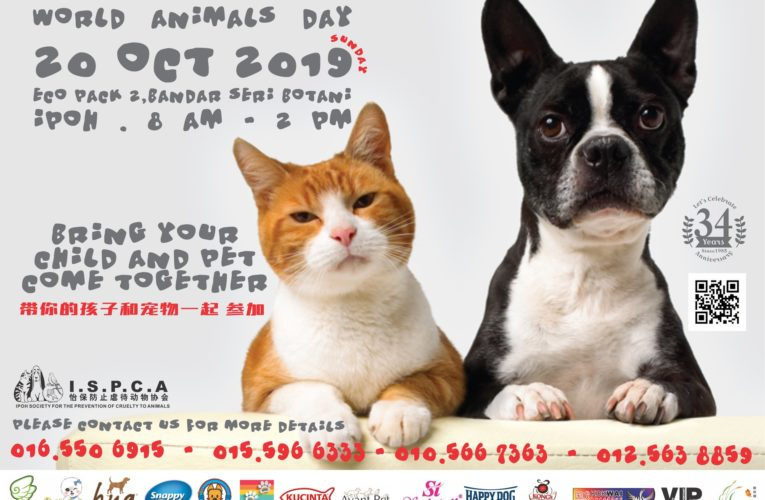Announcement: World Animal Day Celebration