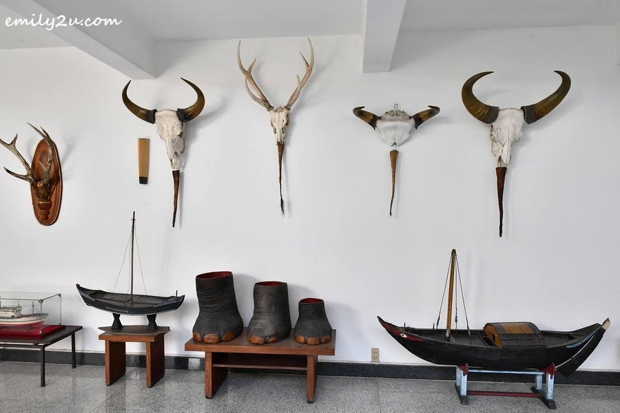 elephant's feet and other hunting trophies on display