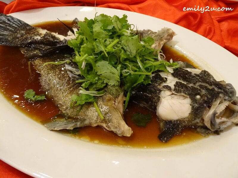 Menu C: Steamed Marble Goby Fish in Soy Sauce