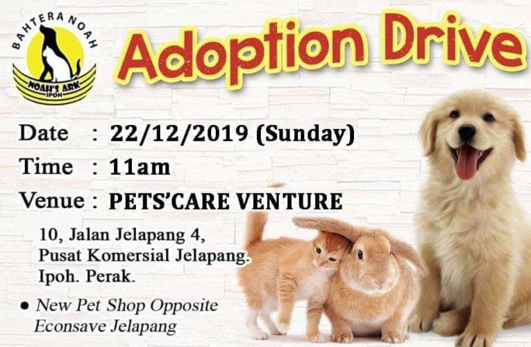 Pet Adoption Drive in Time for Christmas