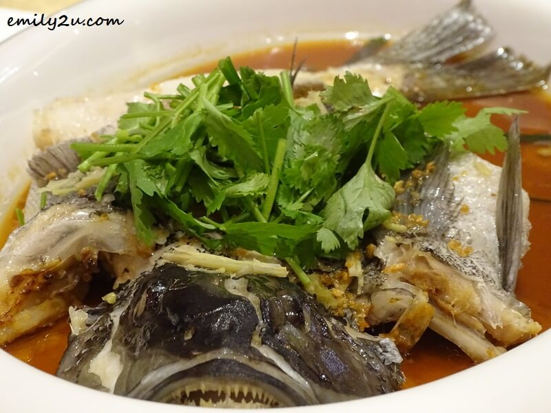 Steamed Cod Fish in Soy Sauce