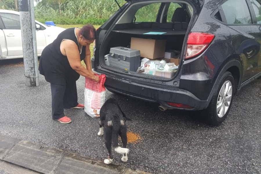 feeding a stray
