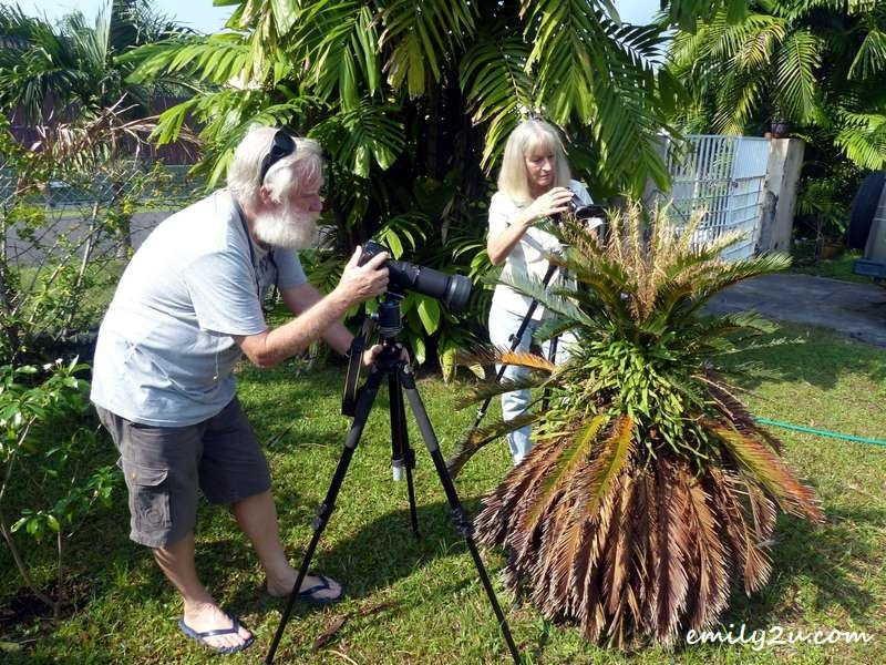 K and Donna shooting the Cycad (Dinosaur Plant) and Cycad Blue (butterflies) in their garden