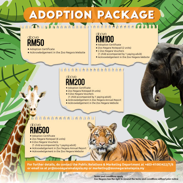 adoption packages