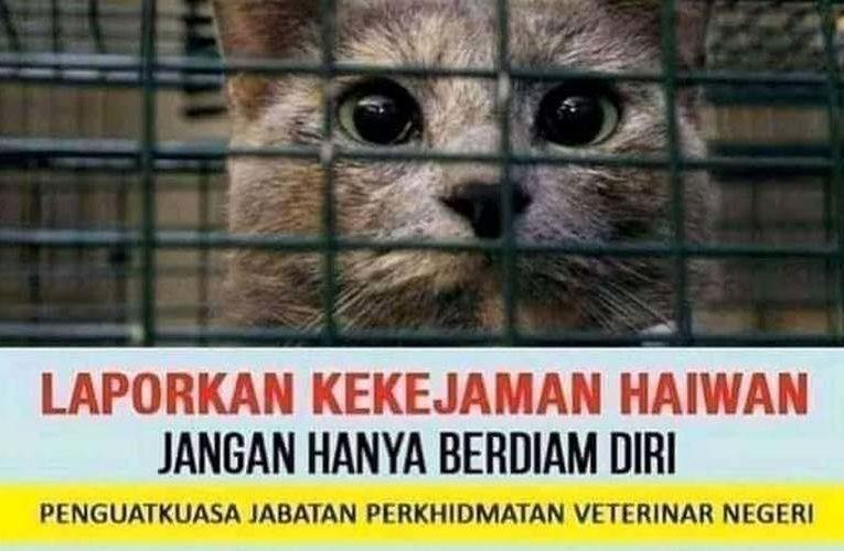 Report Animal Abuse to Jabatan Perkhidmatan Veterinar