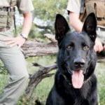 Singita Canine Unit SSS