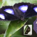 2 Malacca Butterfly Park Reptile Sanctuary