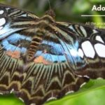 3 Malacca Butterfly Park Reptile Sanctuary