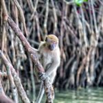 Mangrove Tour by hungryhongkong