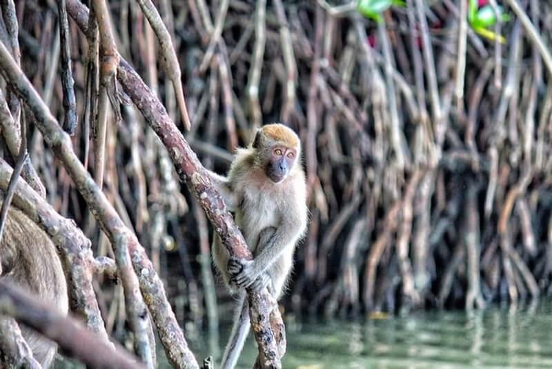 Mangrove Tour (credit: hungryhongkong)