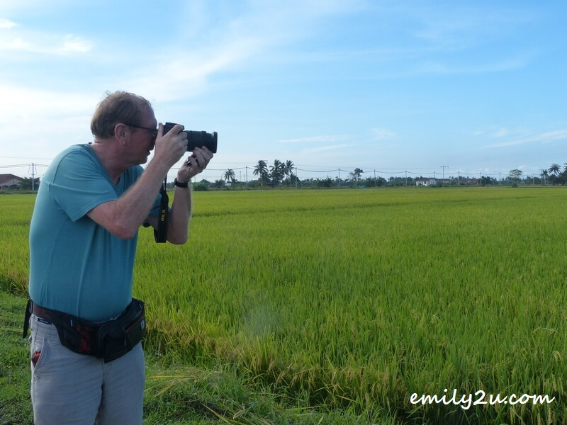 shooting paddy fields at Sungai Haji Dorani, Selangor
