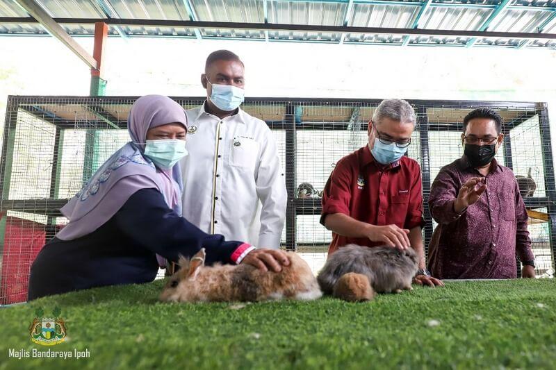 rabbit petting corner