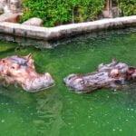 5 Juwita and Jiwang courtship