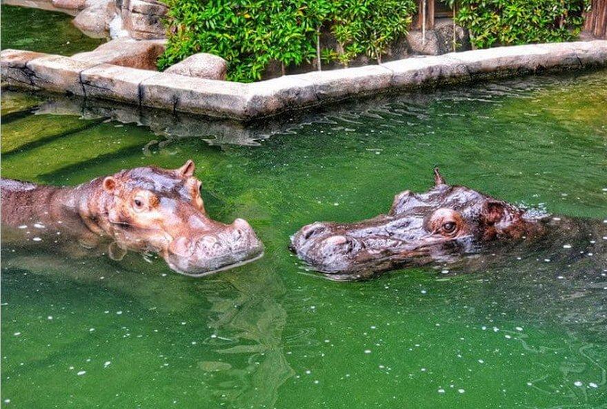 Juwita and Jiwang during their courtship